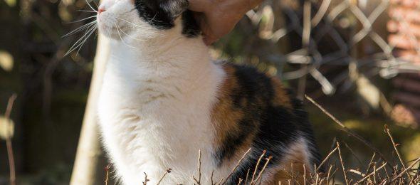Een dierenverzekering afsluiten - Het Verzekeringswezen